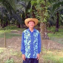 Peladang Jaya Negeri Sabah merekodkan 37.5 tan/ha